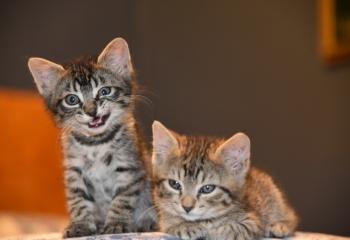 Kittens for ssle